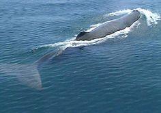 Photo baleine île de La Réunion