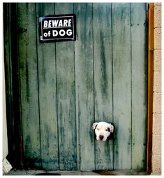 Beware of Dog by Some-Punk-Next-Door.deviantart.com on @deviantART