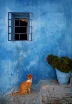 Cat in Morocco