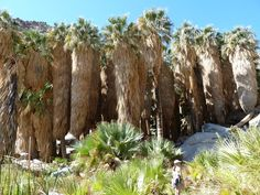 Anza-Borrego Desert State Park covers acres of the Colorado Desert in southern California. The park takes its name from century Spanish explorer Juan […] Borrego Springs, State Parks, Acre, Trips, Colorado, Deserts, Explore, Plants, Travel