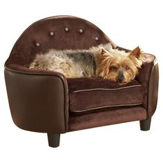Found it at Wayfair - Ultra Plush Headboard Dog Sofa http://www.wayfair.com/daily-sales/p/Sophisticated-Spin-on-Pet-Furniture-Ultra-Plush-Headboard-Dog-Sofa~FVL1125~E18093.html?refid=SBP