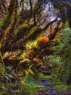 Mousses tropicales, Reunion Island
