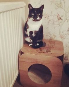 Awwww Pixie is a total cutie pie   I'm sure she will love living in her new forever home with you   #cat #catsofinstagram #cats_of_instagram #catfurnature #catfurniture #catsinboxes #cattoy #INSTACAT_MEOWS #cutecat #PurrMachine #catsinboxes #catbox #Excellent_Cats #BestMeow #dailykittymail #thecatniptimes #catcube #catpod #ArchNemesis #FlyingArchNemesis #myindoorpaws #ififitsisits #cutecatcrew #catchalet #catnip #themeowdaily #kitty #catpyramid #miuandmaosfurriends