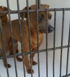 Animal Shelter adopt a pet; Small Dog Breeds, Small Breed, Yorkie, Chihuahua, Animal Rescue Stories, Harris County, Jan 11, Dog Id, 8 Months