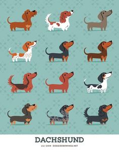 Dachshunds! Short-haired, Long-haired, Wire-haired. The Dachshund originally appears in the GERMAN DOGS print -