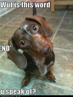 This is EXACTLY what I imagine my dogs are thinking.