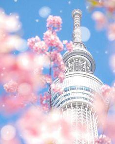 Tokyo Skytree, Tokyo, Japan, 東京スカイツリー,  東京, 日本, sakura, cherryblossom, 桜 sakura, cherry blossom, spring, season, seasons, trees, the real japan, real japan, japan, japanese, tips, resource, tricks, information, guide, community, adventure, explore, trip, tour, vacation, holiday, planning, travel, tourist, tourism, backpack, hiking http://www.therealjapan.com/subscribe/