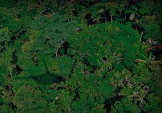 Pregopontocom Tudo: Para manter as florestas