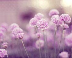 Beautiful flowers - My Garden suach a wonderful flowers! Wonderful Flowers, Purple Flowers, Spring Flowers, Beautiful Flowers, Flowers Nature, Pastel Purple, Floral Flowers, Flowers Garden, Romantic Flowers
