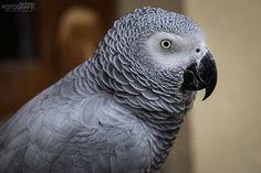 Grau Papagei by Dean Buchholz on 500px