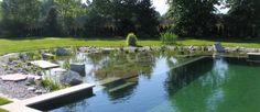33 Amazing Natural Pool Designs for Green Living | Green Home Therapy