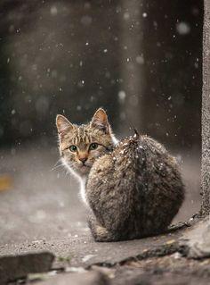 Stunning Animal Portraits by Sergey Polyushko #inspiration #photography