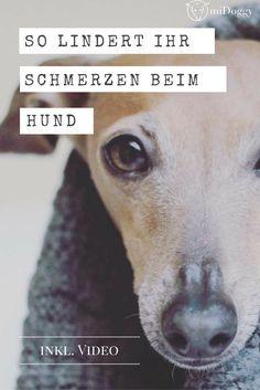 Hier erfährst du, wie du mit Igelball, Bürste und Striegel deinem Hund bei Schmerzen helfen kannst.