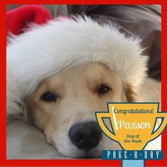 Paxson has been a very good boy this year and he cant wait for Santa to come. He loves to open presents and is the first one downstairs on Christmas morning. Congratulations to Paxson our Page-A-Day Dog of the Week! Vote for Top Dog! http://ift.tt/1P29vGs #365Dogs #petsofpageaday #DogsofInstagram #DogsofPageADay #DogsofInstaworld #dogs_of_instagram #petstagram #dogstagram #instagramdogs #doglover #instadog #instapet #dogcontest #blacklab #petcontest #dogcontest #dogphoto #dogpic