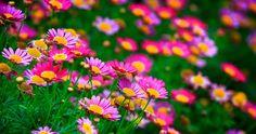 flowers meadow 4k ultra hd wallpaper