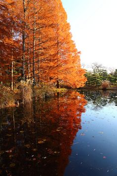 Autumn reflection by Shingan Photography, via Flickr