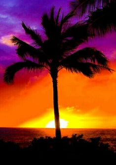 Palm Tree Sunset, Palm Trees, Palm Tree Background, Background Colour, Palm Tree Pictures, Lucas 1, Hawaii Honeymoon, Hawaii Travel, Cool Tree Houses