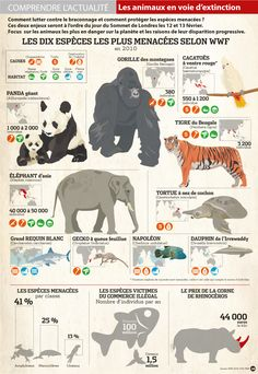 Gefährdete Tiere 8230 Les animaux en voie de d+ Ap French, French Class, Learn French, All About Animals, Animals For Kids, Cute Animals, French Teacher, Teaching French, Chore Chart Kids