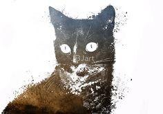 Cat Jerry