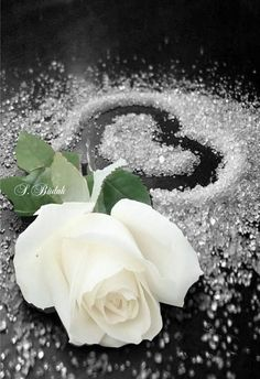 Exotic Flowers, Beautiful Flowers, My Flower, Flower Power, White Roses Background, Blue Butterfly Wallpaper, Cute Love Couple Images, Splash Images, Dont Touch My Phone Wallpapers