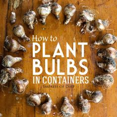 How to plant bulbs in containers   plant your spring-flowering bulbs now!   empress of dirt on #ebay