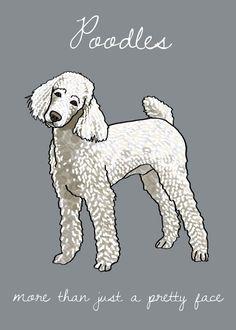Misunderstood Poodle Print Modern Dog Art by adrianawillsie