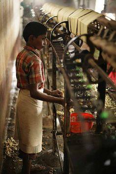 Child Silk Factory Worker