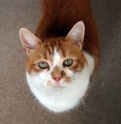This is Tiggy my best mate for over 17 years by purrrzazz. What you think about?