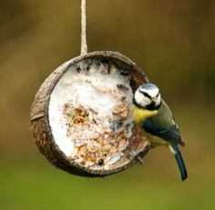 Ideas for Feeding Wild Birds - Things to Make and Do, Crafts and Activities for Kids - The Crafty Crow