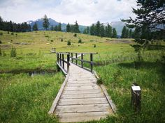 Pinterest Icon, Sidewalk, Mountains, Nature, Travel, Europe, Medicinal Plants, National Forest, Travel Advice