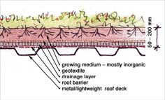 A line drawing of a cross-section of an extensive green roof. The roof is between 50 and 200 millimetres high. From the bottom to top, the l...