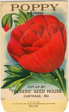 Vintage Flower Seed Packet Tucker's Seed House Lithograph POPPY Flanders (Carthage, Missouri)