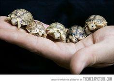 A handful of aww