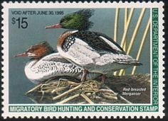 Federal Duck Stamp RW61 1994-95 Red-Breasted Merganser - TR Duck Stamps, Etc.