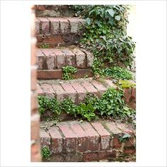 Brick steps clad in Hedera - Ivy at Sandhill Farm House, Sussex