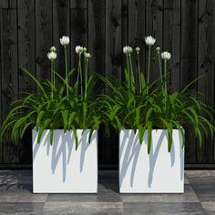 3D Plants Model - 3D Model