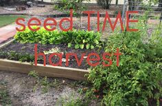 seed TIME harvest – Living the life God intended