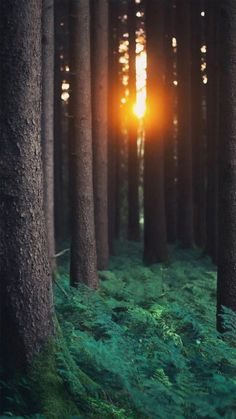 Morning Sunlight Through Forest Trees #iPhone #6 #wallpaper