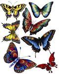 Мобильный LiveInternet Новая коллекция бабочек для вашего творчества | Марриэтта - Вдохновлялочка Марриэтты |
