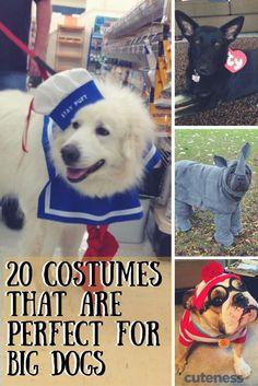 Big dogs love Halloween costumes too!