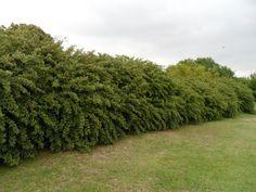 Pin De Katalin Votyku En Trees