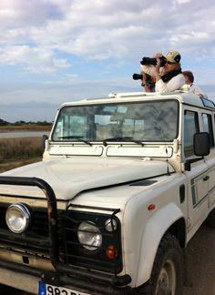 Des safaris vous seront proposés afin de découvrir la Camargue d'une autre manière, à bord de 4*4, de quads, ou de chariots tirés par des chevaux Le Gard, Pont Du Gard, Safari, 4x4, Chariots, Afin, Passion, Tourism