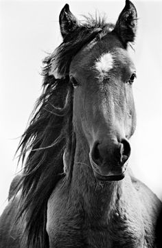 The Wild Horses of Sable Island photographed by Roberto Dutesco