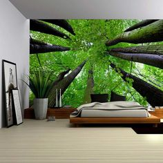 Gazing Up Into a Leafy Covered Forest Wall by Wall26WebStore