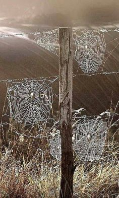 Nature is beautiful: Spider webs All Nature, Amazing Nature, Spider Art, Spider Webs, Foto Macro, Jolie Photo, Ciel, Country Life, Beautiful World