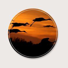 Vogels die weer naar warme landen vliegen is een fenomeen dat elk jaar weer voor komt. Mooie afbeelding van vogels in de lucht met een zonsondergang. De muurcirkel past in de meeste interieurs, en heeft warme najaars-kleuren. De keuze is aan jou in welk formaat je mooi vind en welke achtergrondkleur.