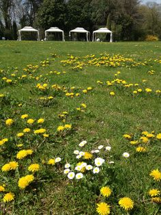 Springtime in Treviso @RelaisMonaco