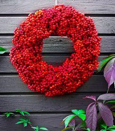 Nyt on mahdottoman hyvä pihlajanmarjavuosi. Puut notkuvat raskaina punaisista marjoista. Tee niistä upea kranssi tai pakasta terttuja vaikka...