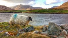 """Driving through Connemara is like driving into  """"Neverland""""."""