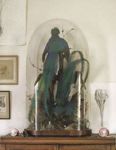 Beautiful taxidermy Glass Bell Jar, The Bell Jar, Glass Domes, Bell Jars, Good New Books, Steampunk House, Natural Interior, Bird Boxes, Woman Bedroom